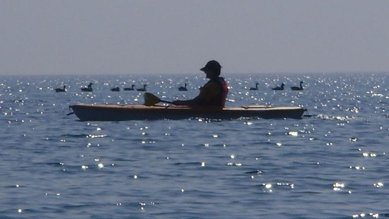 sam-in-kayak-wth-geese