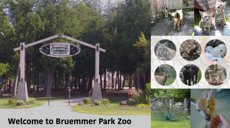brummer-park-zoo