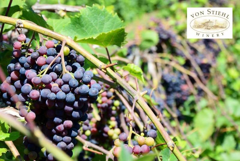 Vineyard-Views
